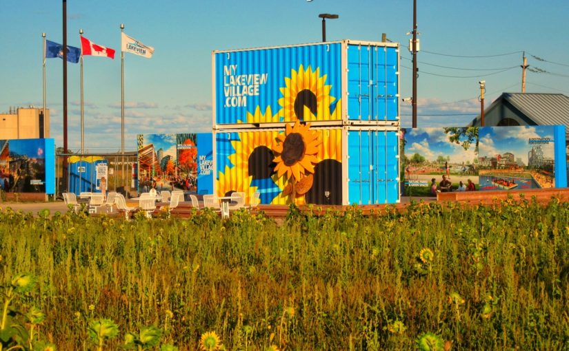 One Million Sunflowers at the site of Lakeview Village, Mississauga